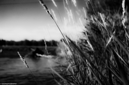 river-side-grass