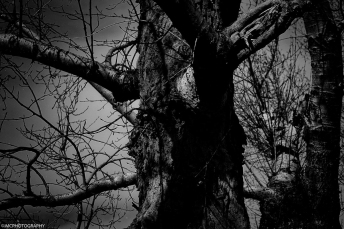the-old-tree-by-the-coal-mine